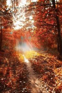 Sunlight through the autumn woods